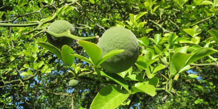 Sinefrina: extracto de naranja amarga como aliado en la lucha por la reducción de grasa y una silueta atlética