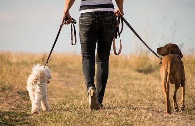 mujer camina con perros